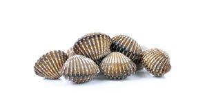 Fondo fresco dei frutti di mare dei cuori edule Fotografie Stock