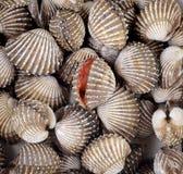 Fondo fresco dei frutti di mare dei cuori edule Fotografia Stock Libera da Diritti
