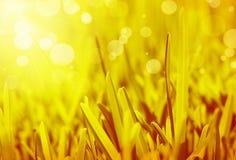 Fondo abstracto de la hierba Fotografía de archivo libre de regalías