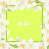 Fondo fresco del verano con Jasmine White Flowers Diseño Eleme Fotografía de archivo libre de regalías