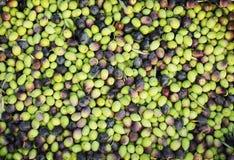 Fondo fresco delle olive Immagine Stock Libera da Diritti
