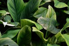Fondo fresco 1 delle piante Immagini Stock Libere da Diritti