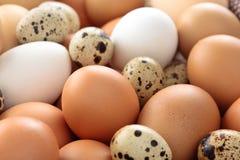 Fondo fresco delle uova Immagine Stock