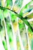 Fondo fresco di estate - con un ramo dipinto a mano esotico immagini stock libere da diritti