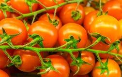 Fondo fresco y delicioso de los tomates Imagen de archivo