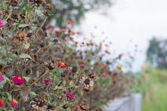 Fondo fresco y seco hermoso de la flor en la naturaleza Fotografía de archivo