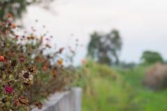Fondo fresco y seco hermoso de la flor en la naturaleza Fotos de archivo