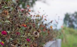 Fondo fresco y seco hermoso de la flor en la naturaleza Foto de archivo libre de regalías