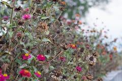 Fondo fresco y seco hermoso de la flor en la naturaleza Imagen de archivo