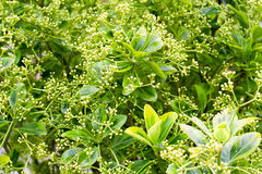 Fondo frondoso verde, struttura fotografia stock