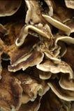 Fondo fungoso de madera   Imagen de archivo libre de regalías