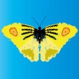 Fondo giallo astratto della farfalla di vettore Fotografie Stock Libere da Diritti