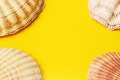 Fondo giallo con le conchiglie Fotografia Stock