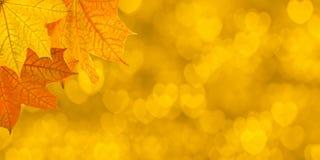 Fondo giallo con le foglie di acero ed i cuori Fotografia Stock Libera da Diritti