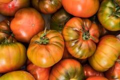 Fondo giallo dei pomodori Gruppo di pomodori, vista superiore Fotografie Stock Libere da Diritti