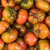 Fondo giallo dei pomodori Gruppo di pomodori, vista superiore Fotografia Stock