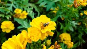 Fondo giallo del fiore Fotografia Stock