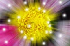 Fondo giallo del fiore della sfuocatura Immagini Stock
