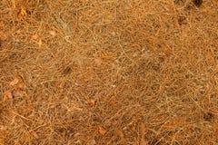 Fondo giallo dell'erba Struttura dell'erba Primo piano asciutto, vecchia, flora naturale dell'erba L'autunno è concetto venente C Fotografia Stock Libera da Diritti