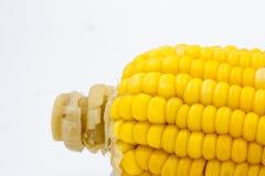 Fondo giallo dell'estratto del cereale Fotografia Stock