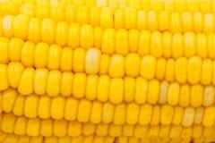Fondo giallo dell'estratto del cereale Immagini Stock