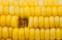 Fondo giallo dell'estratto del cereale Immagini Stock Libere da Diritti