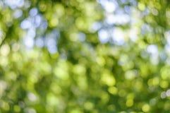 Fondo giallo della luce dell'estratto del bokeh, bokeh della foresta Fotografia Stock Libera da Diritti
