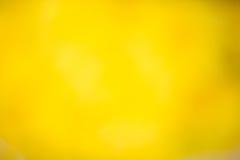 Fondo giallo della natura Fotografia Stock