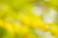 Fondo giallo e verde di Bokeh Immagini Stock