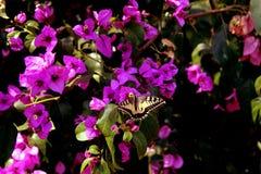 Fondo giallo meraviglioso della farfalla Immagini Stock Libere da Diritti