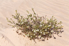 Fondo grande de la arena con las ondas y las plantas Imagen de archivo libre de regalías