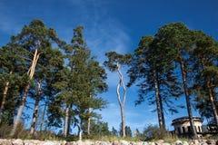 Fondo grande de la naturaleza de los árboles Fotos de archivo