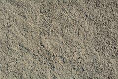 Fondo grigio del cemento Immagini Stock