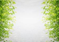 Fondo gris del cemento con las hojas verdes Foto de archivo