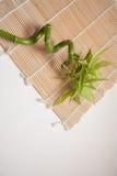 Fondo gris del zen con el bambú Fotos de archivo libres de regalías