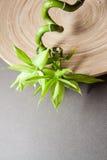 Fondo gris del zen con el bambú Foto de archivo libre de regalías