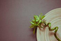 Fondo gris del zen con el bambú Imagen de archivo