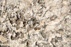 Fondo grungy astratto bianco da una superficie rocciosa Fotografie Stock Libere da Diritti