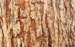 Fondo grungy della corteccia di legno Immagine Stock
