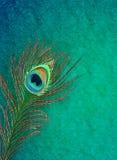 Fondo grungy della piuma del pavone Fotografie Stock