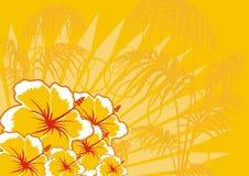 Fondo Hawaï stock afbeeldingen