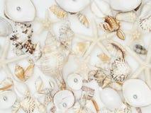 Fondo hecho de cáscaras del mar fotografía de archivo