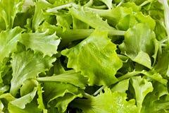 Fondo hecho de hojas de la ensalada verde fresca Imagenes de archivo