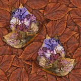 Fondo hecho de las mariposas de diversas flores Imágenes de archivo libres de regalías
