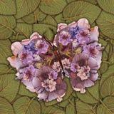 Fondo hecho de las mariposas de diversas flores Imagen de archivo
