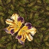 Fondo hecho de las mariposas de diversas flores Imagenes de archivo
