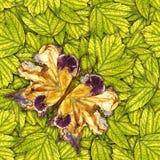 Fondo hecho de las mariposas de diversas flores Foto de archivo libre de regalías
