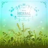 Fondo herbario delicado Imágenes de archivo libres de regalías