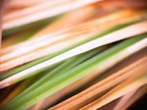 Fondo herboso natural foto de archivo libre de regalías