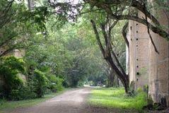 Fondo hermoso, árboles viejos con la cámara del ladrillo Imagen de archivo